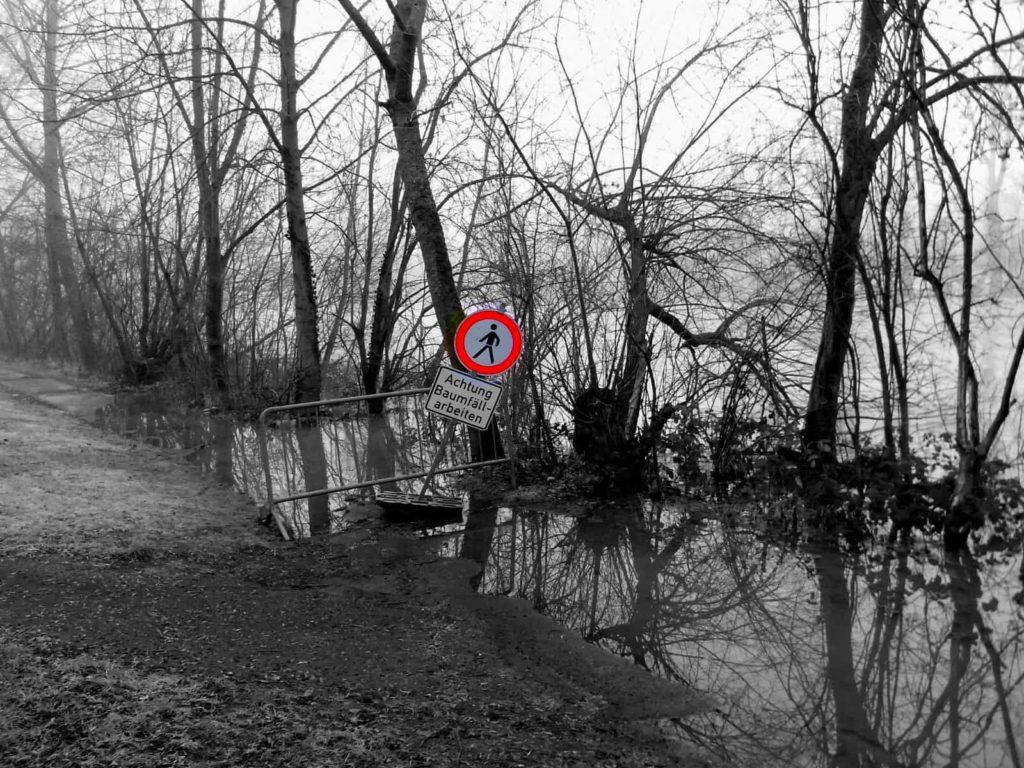 Vorsicht - Baumfällarbeiten im Hochwasser
