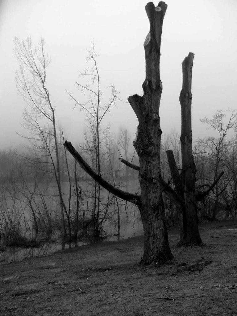 Winterruhe der Bäume