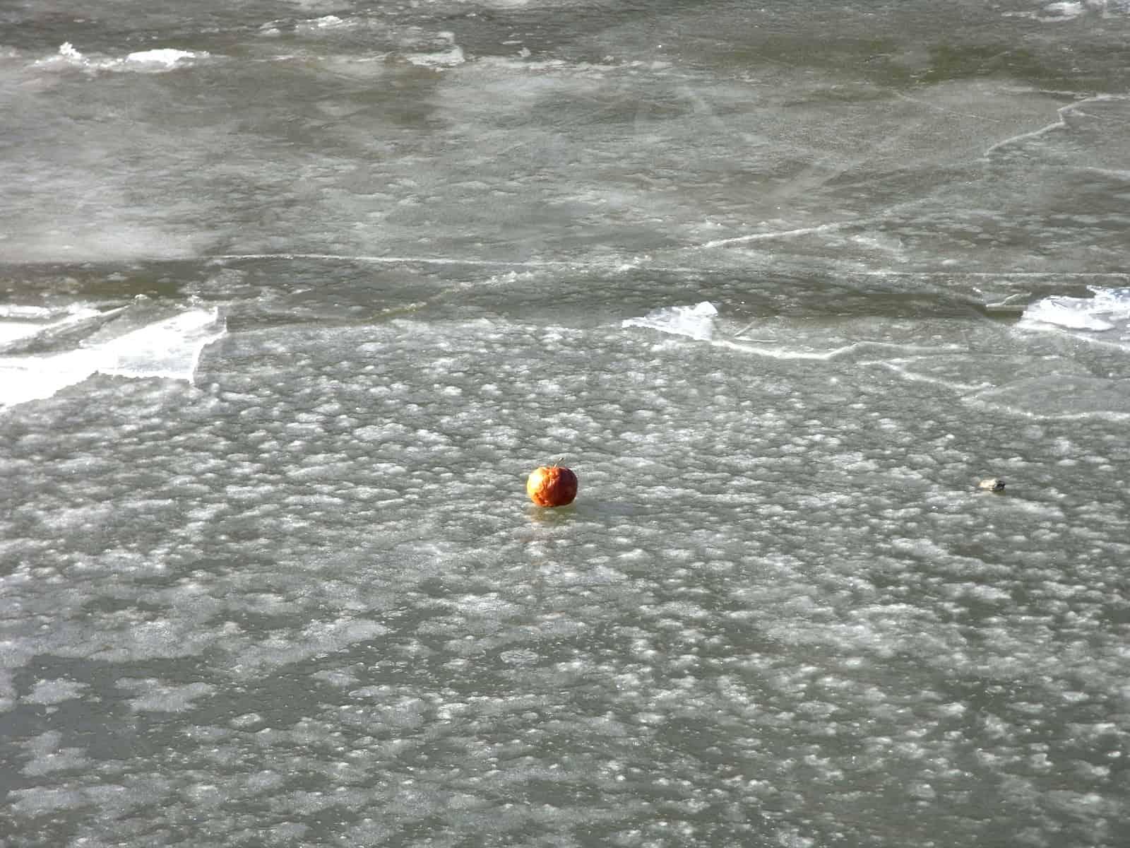 Apfel auf Eis