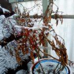 Winter auf dem Balkon