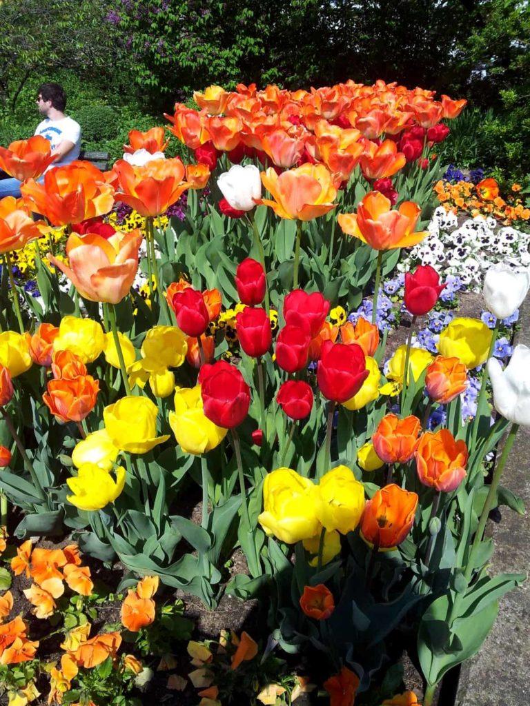 Frühling und Tulpen in Würzburg