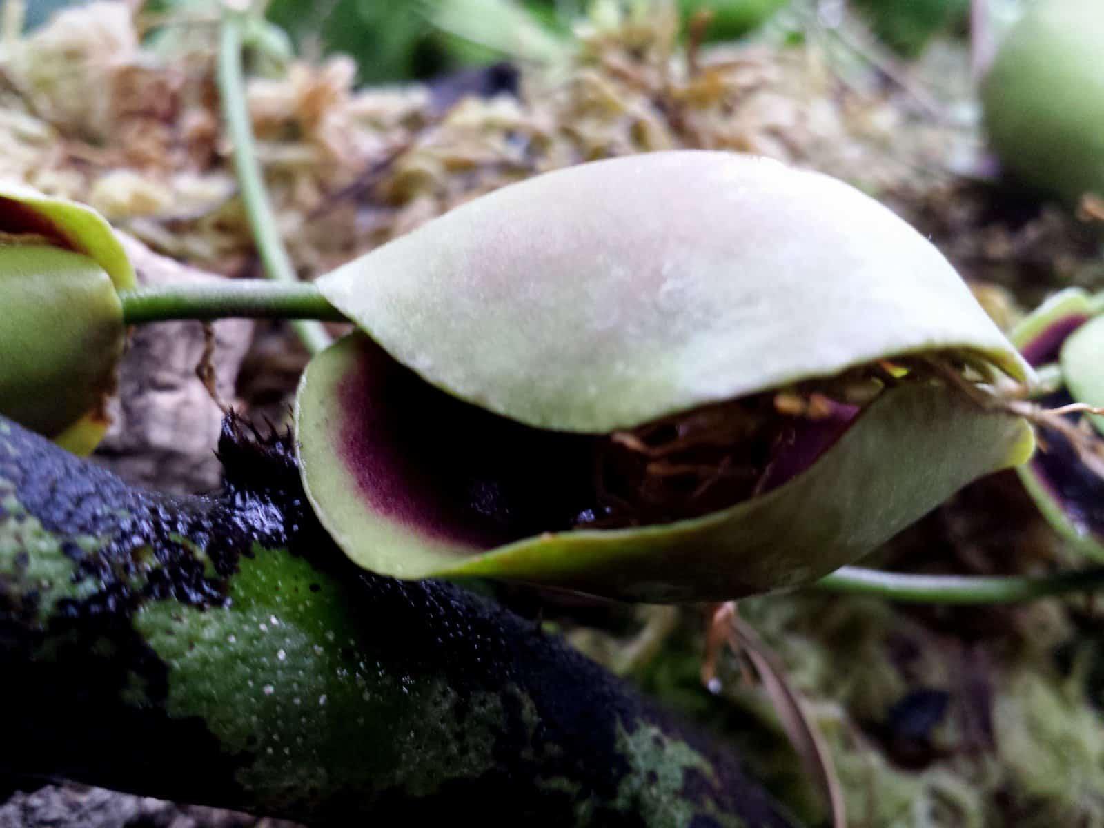 Pflanzen anguggen im botanischer garten w rzblog for Gelbe tafeln