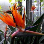 Eine Blüte in Form eines Vogelkopfs