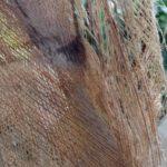 Fasern der Kokospalme