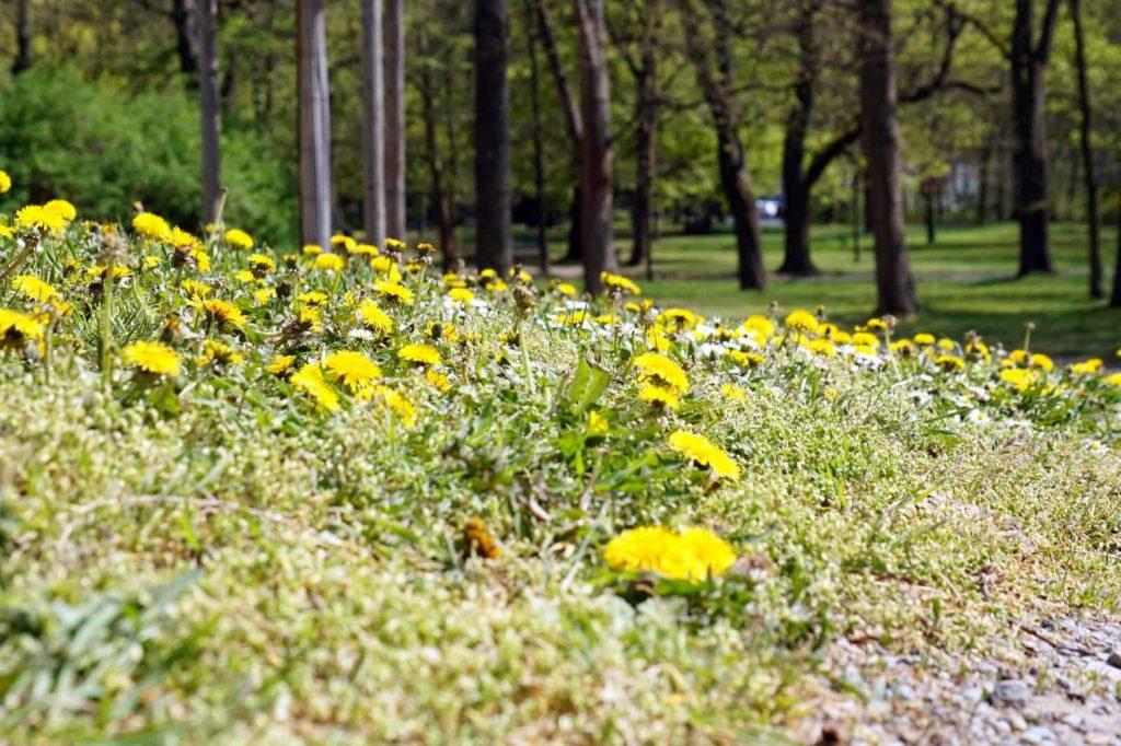 Unspektakulär, aber schön - Blumenblüte im Ringpark