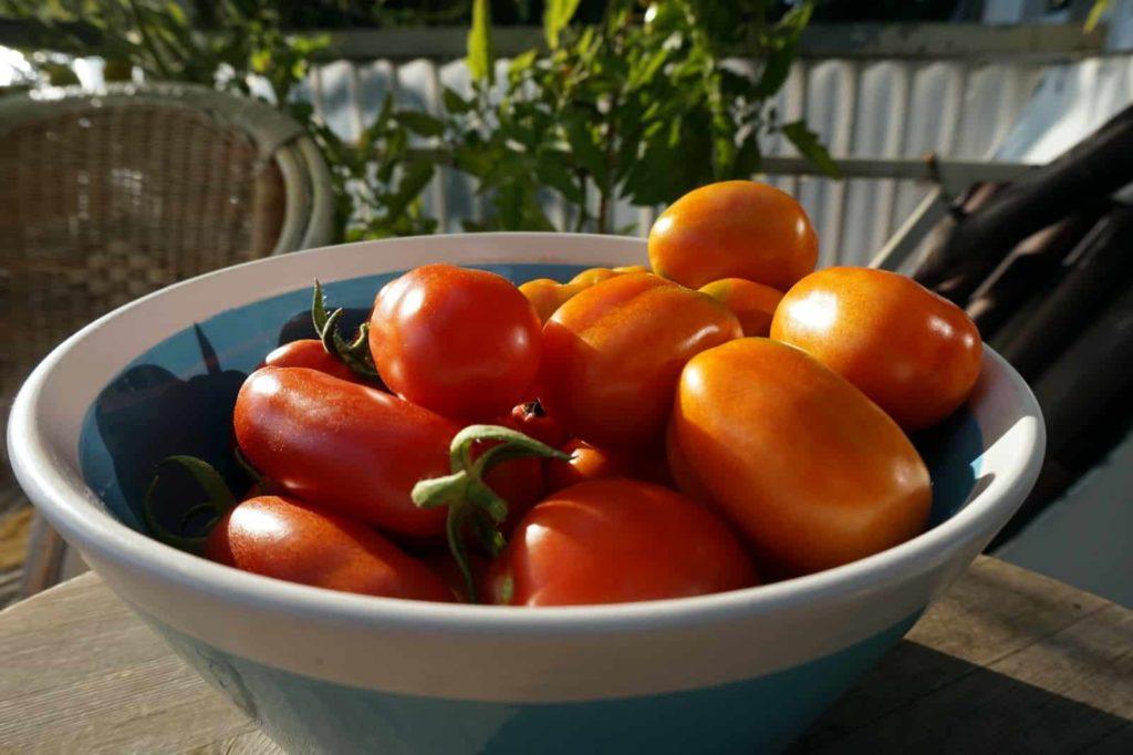 Groß, kein, rot und orange - 48 Tomaten in der Schüssel
