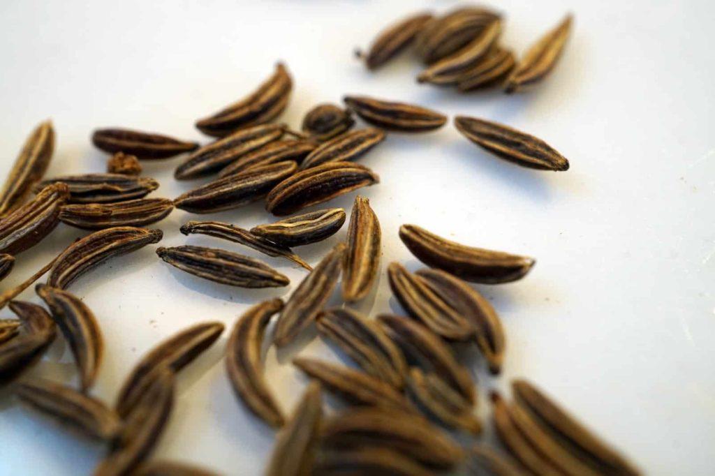 Samen des Echten Kümmel, der Arzneipflanze des Jahres 2016