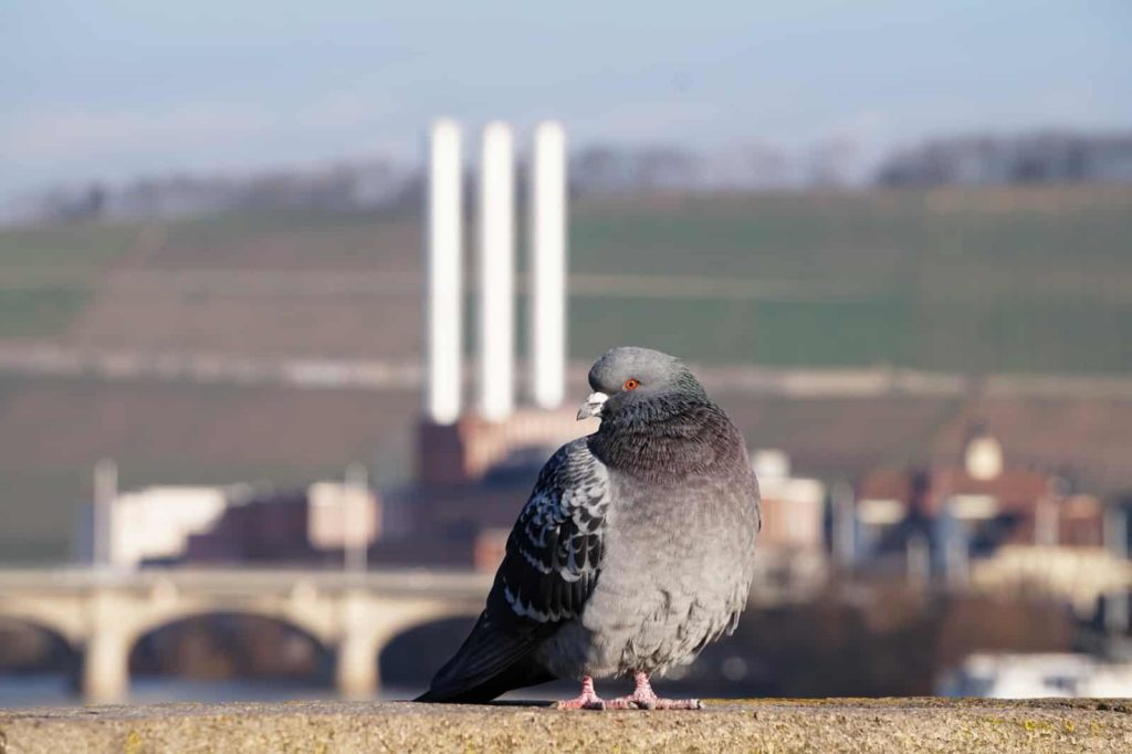 Tagü ber dem Heizkraftwerk und eine Taube davor
